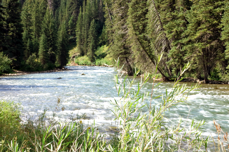 IMG_9905 River grasses Greys